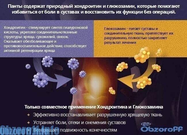 Artropantă cremă articulară. Artropant – negativ comentarii, opinii, preț, site-ul oficial