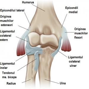 punct în articulația cotului doare