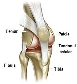 capsula articulației genunchiului subțire
