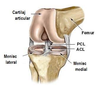 mijloace de inserție în articulația genunchiului)