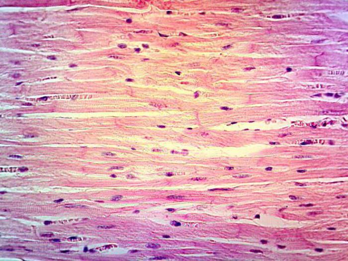regenerarea țesutului conjunctiv fibros liber