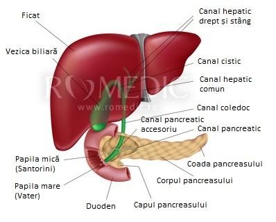 mărirea durerilor articulare hepatice