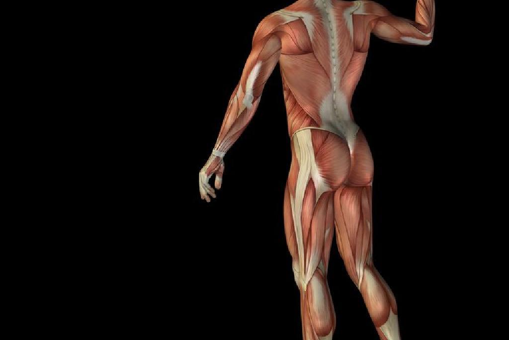 Ce este distrofia musculara? | Filiala Bucuresti a Asociatiei Distroficilor Muscular