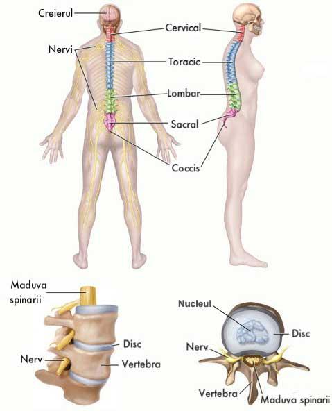 edem de măduvă osoasă tratamentul ureaplasmei și articulațiilor