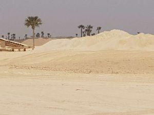dune medicinei comune