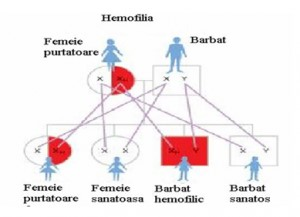 tratament articular pentru hemofilie