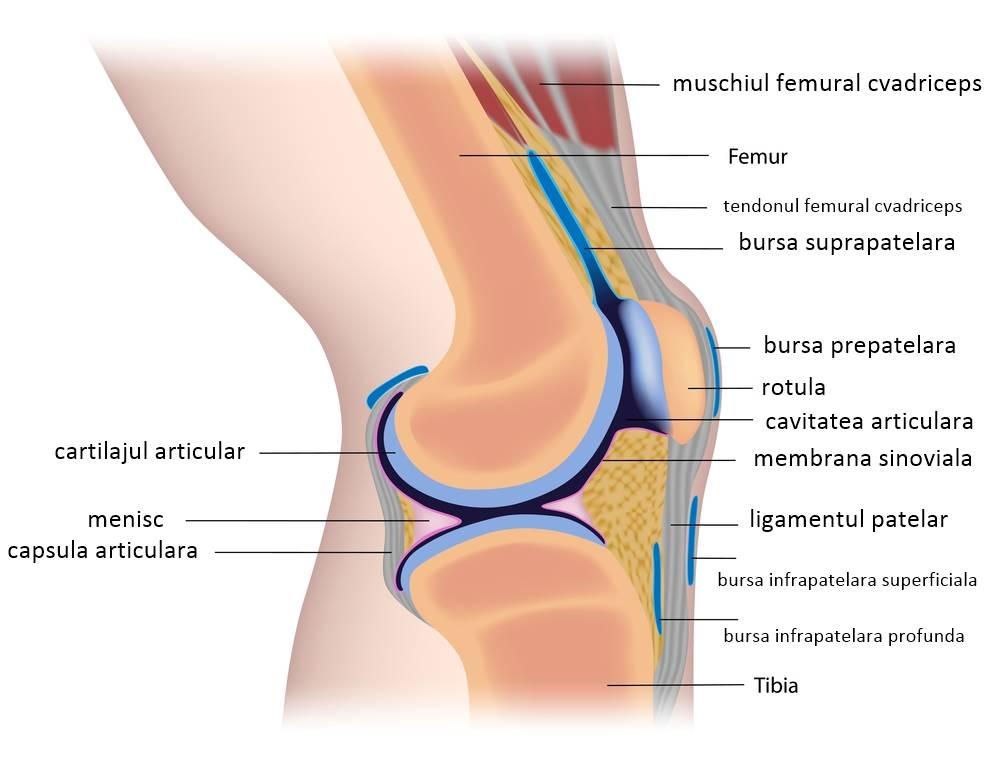 artroza femurală a genunchiului