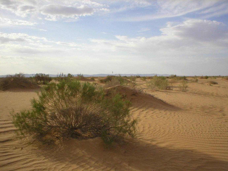 dune medicinei comune)
