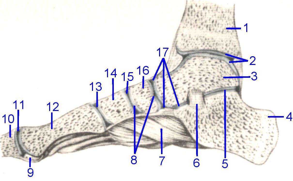 tratați articulația pe picioare