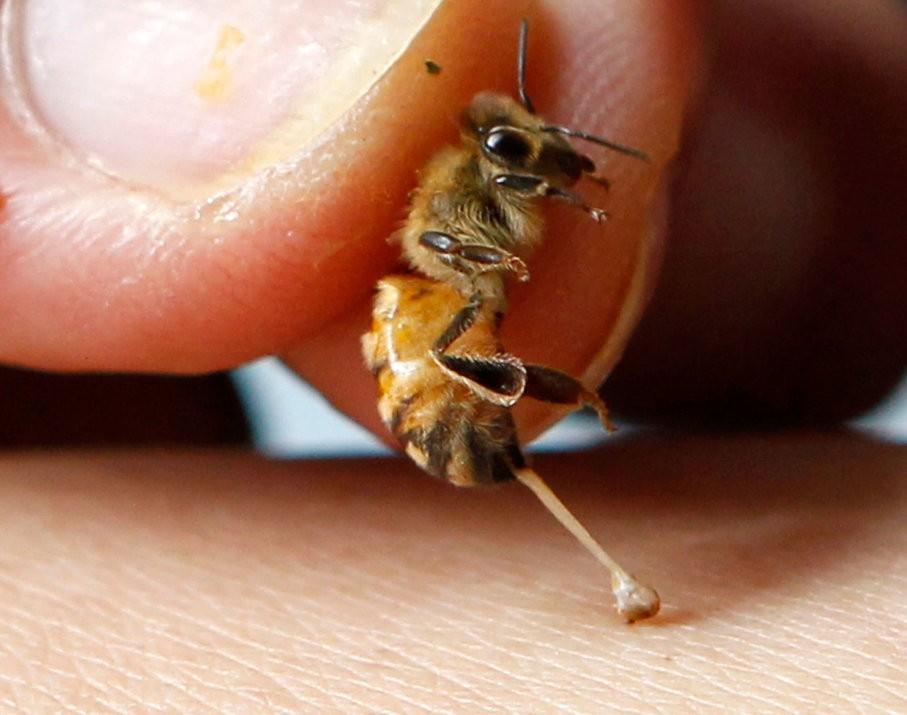 Remedii cu venin de albine pentru reumatism