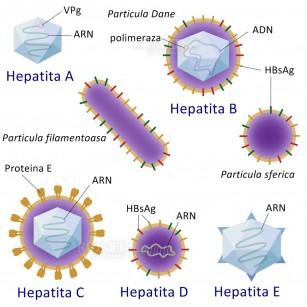 Dureri articulare cauzate de hepatita C, Durerile musculare in hepatita C