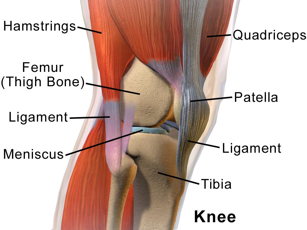 articulația metalică a genunchiului)