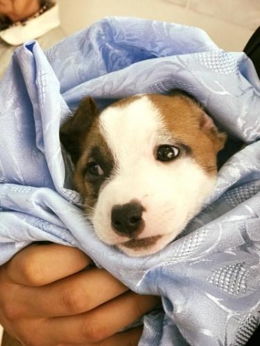 chirurgie articulară chirurgie veterinară)