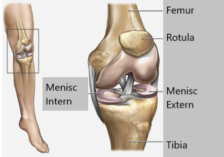 patologia meniscului tratamentului articulației genunchiului)