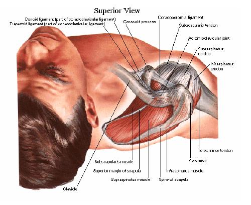 inflamația mușchilor și ligamentelor articulației umărului)