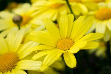 plante medicinale pentru articulațiile genunchiului)