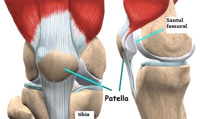 pliul mediopatelar al tratamentului articulației genunchiului)