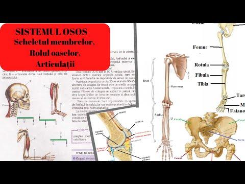 Articulațiile rănesc membrele amorțite