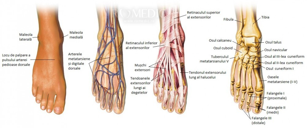 articulația bolii piciorului