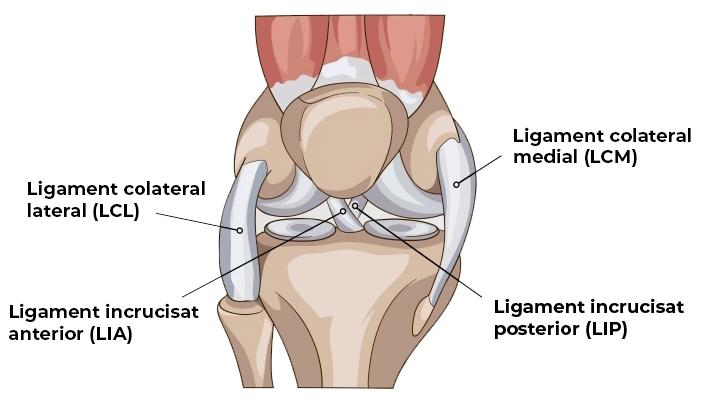 afectarea traumatismelor la ligamentele articulației