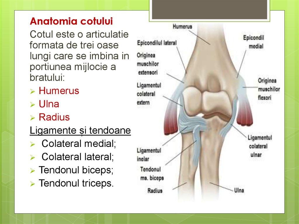 inflamația ligamentelor epicondilitei articulației cotului artrita guta a simptomelor articulației cotului și tratament