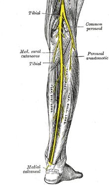 Tipuri de articulații false și trăsături ale tratamentului acestora