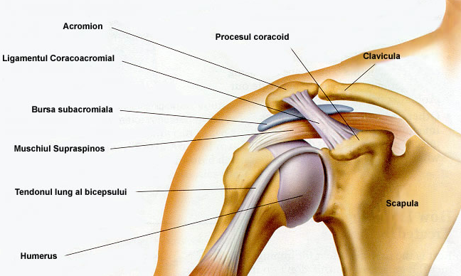 durere în interiorul articulației umărului)