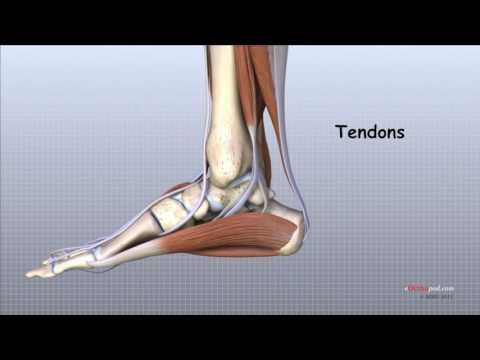artroza a 2 a etapă a articulației gleznei)