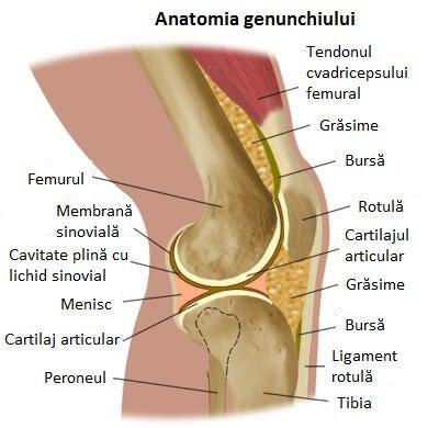 durere și fluid în articulația genunchiului)