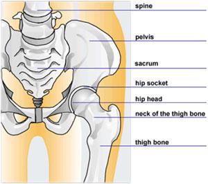 durere în articulația femurală și sacru