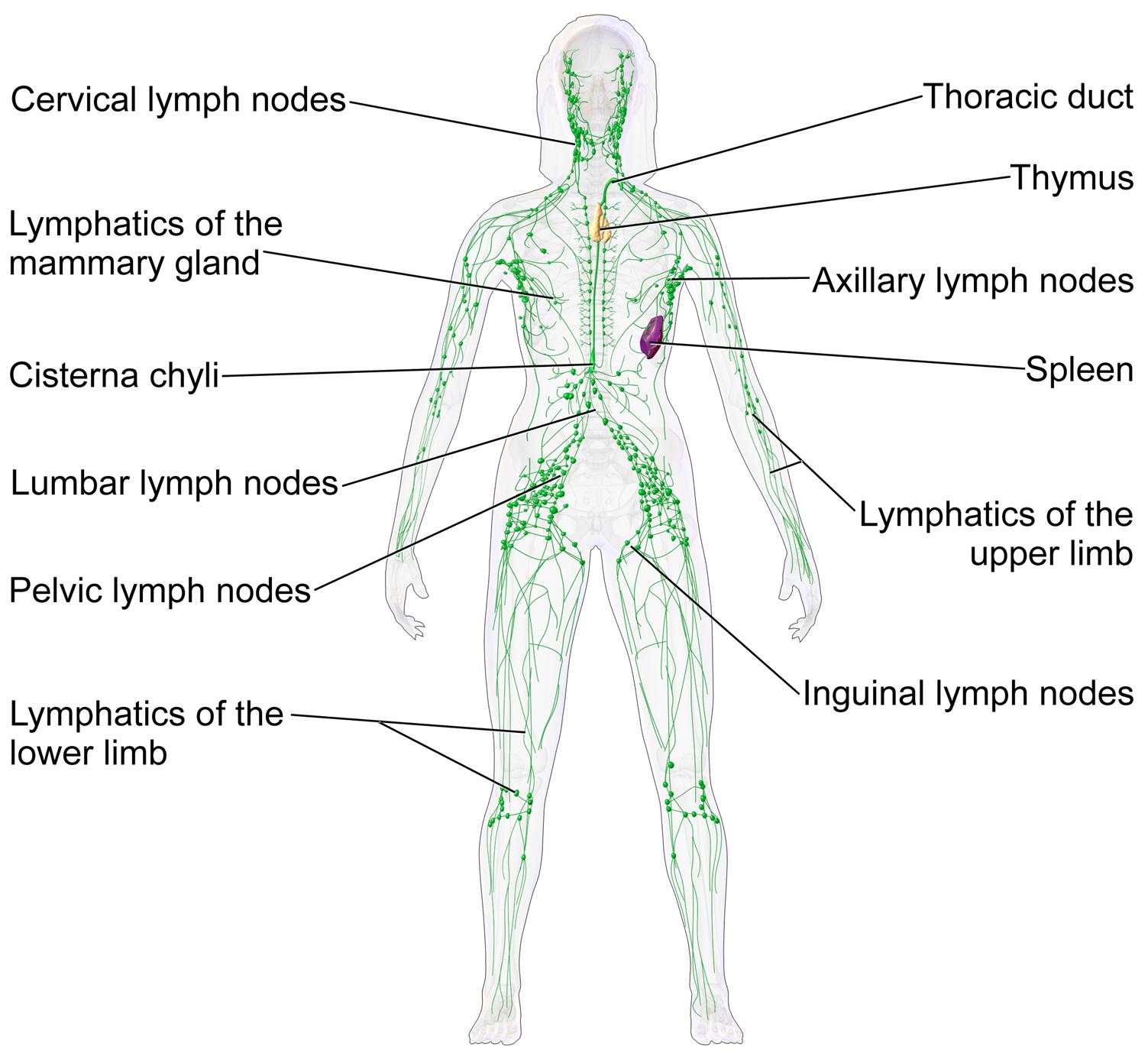 umflarea fluxului limfatic al articulațiilor)