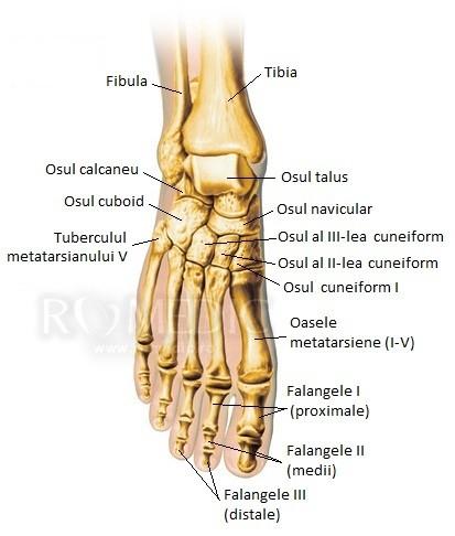 artroza articulației piciorului stâng)