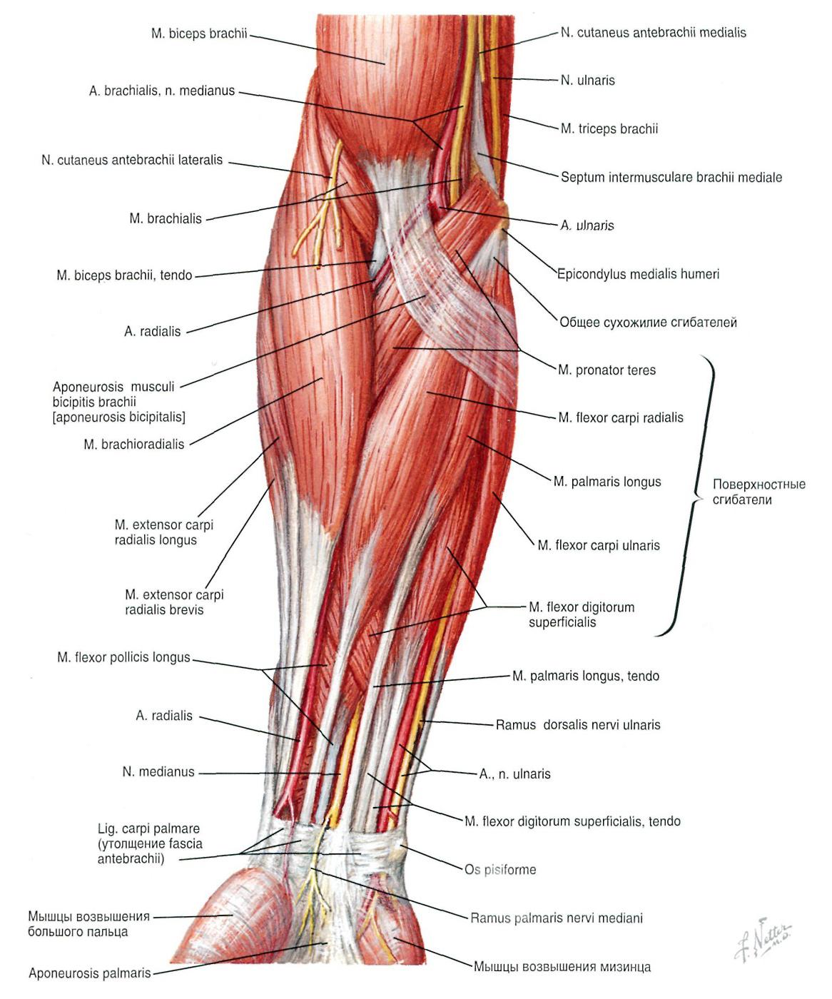 Durerea articulară și umflarea întregului corp. Întregul Corp Dă Simptome,, Subiecte în Health