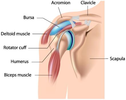 edem sub articulația umărului crize și durere a articulațiilor umerilor