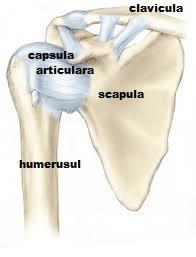braț dureros în articulația umărului după cădere)