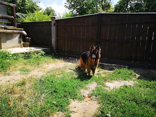 Caută cazare câini și pisici la pet sitteri cu experiență