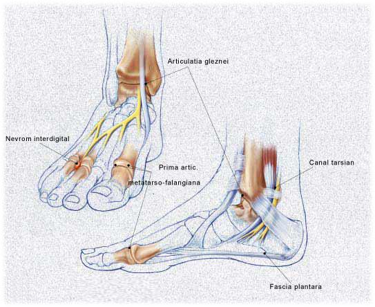 afectarea nervilor la articulația gleznei)