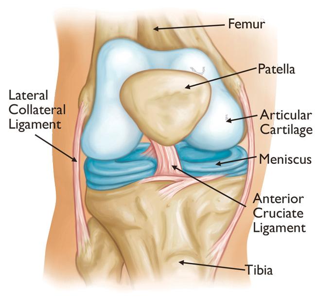 articulația genunchiului a zburat afară)