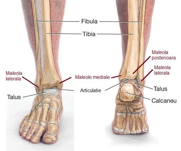 deteriorarea ligamentului în articulația gleznei