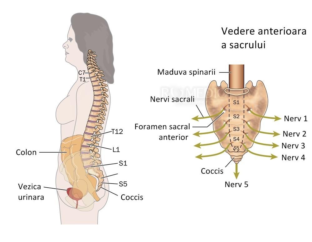 coloana vertebrală doare și articulații)