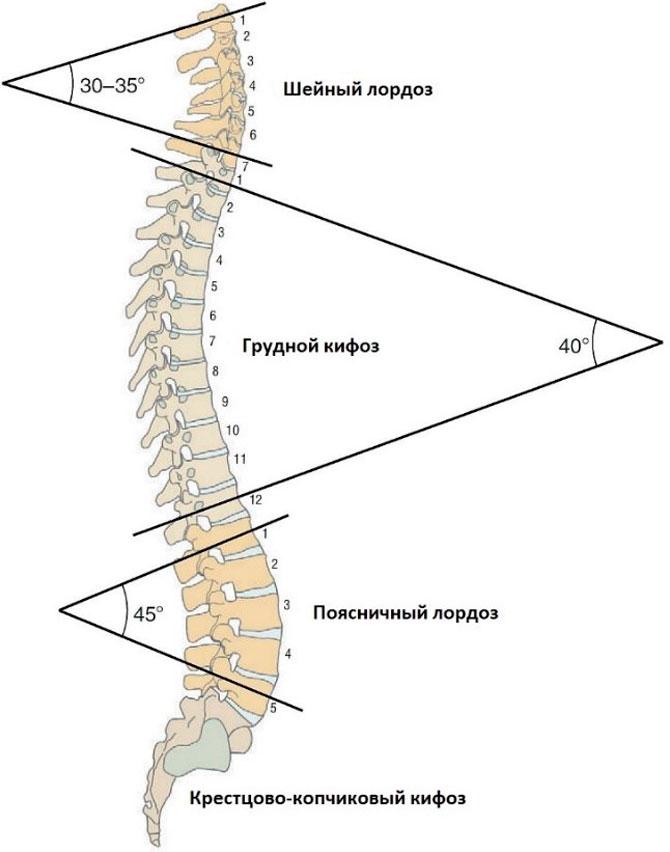 de ce se rănesc articulațiile și spatele)