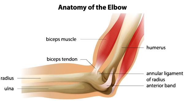 leziune musculară a articulației cotului
