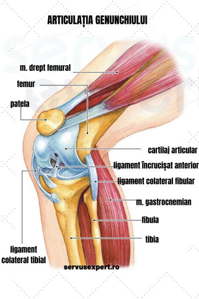 durere cauzată de o vânătăi în articulația genunchiului)