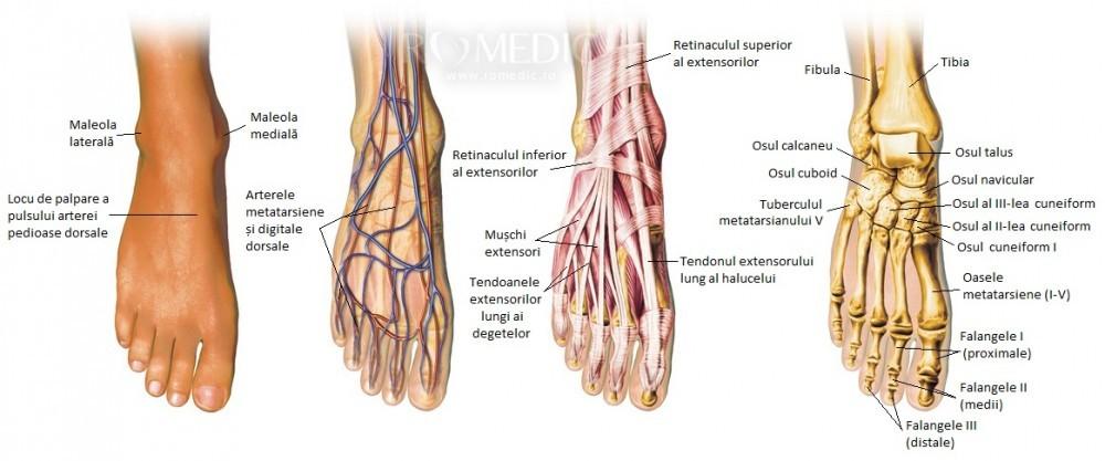 durere la nivelul articulațiilor falangeale metatarsiene
