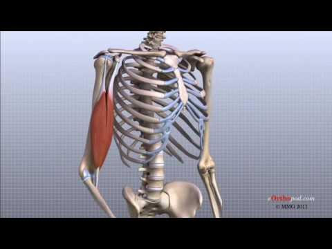 unguent pentru tratamentul artrozei articulației cotului)