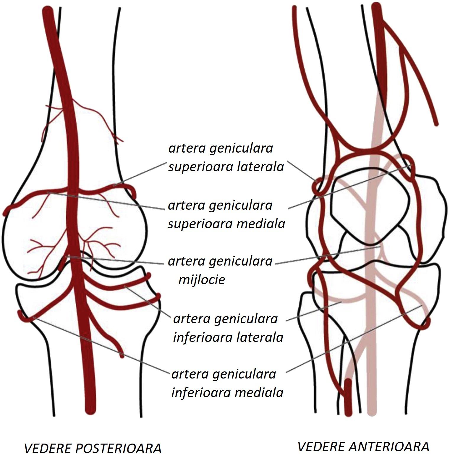 periostita tratamentului articulației genunchiului artroza osteoporozei a genunchiului