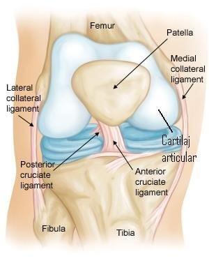 Refacerea articulatiei genunchiului prin intermediul celulelor stem