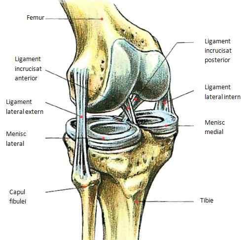 tratamentul rupturii ligamentelor în articulația genunchiului