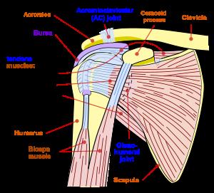 găsește rănile articulației umărului