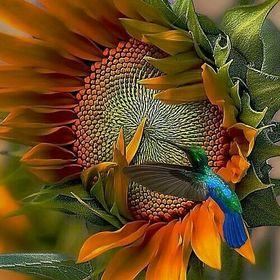 hellebore vindecă articulațiile inflamație articulară într-un papagal